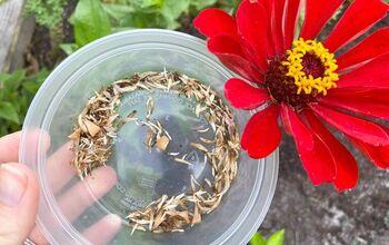How to Save Zinnia Seeds