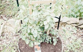DIY: Trailing Rose Garden Planter