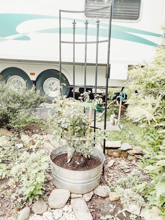 diy trailing rose garden planter