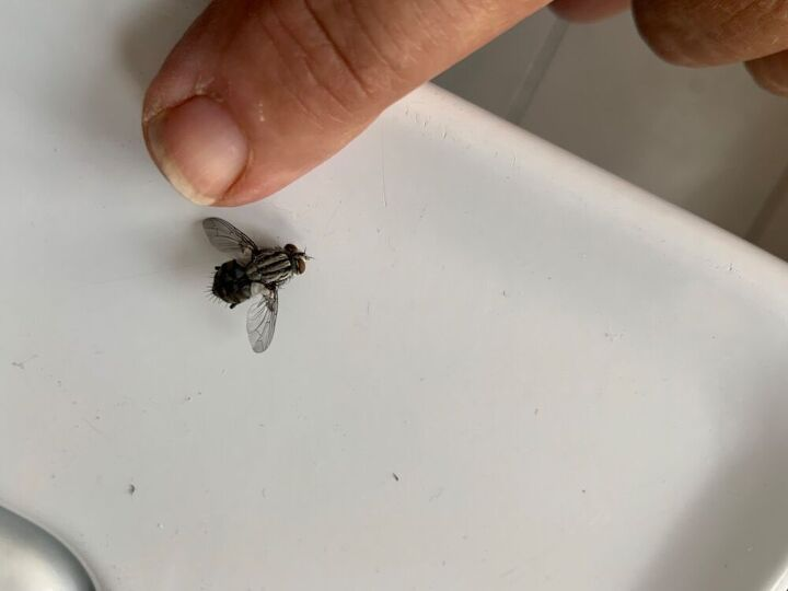 q how to get rid of houseflies