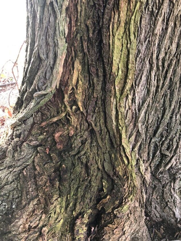 q should tree come down