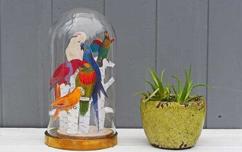 Tropical Decor for Your Glass Dome