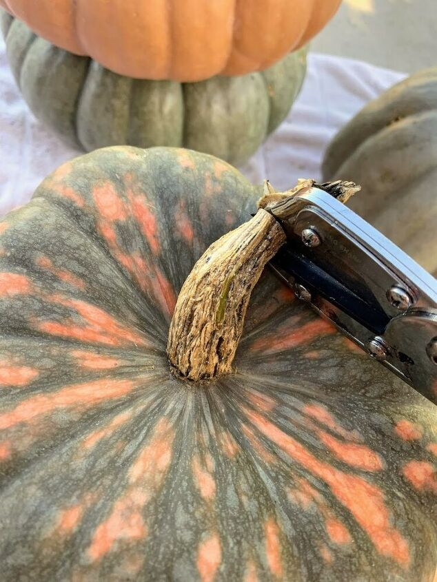 how to preserve your pumpkins to make them last longer