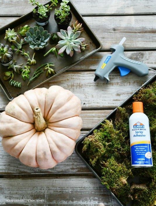create a succulent pumpkin centerpiece