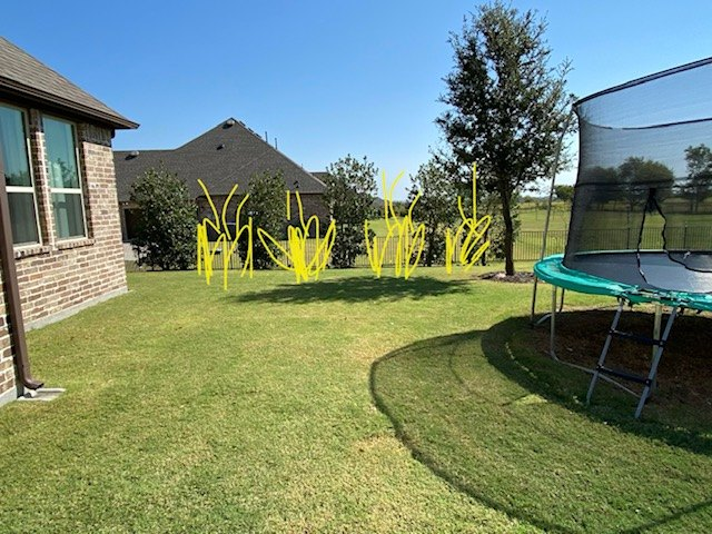 q how should i landscape for more privacy with grasses shrubs