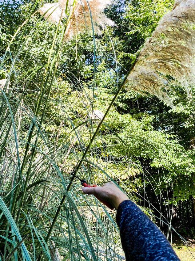 how to dry pampas grass in 3 easy steps
