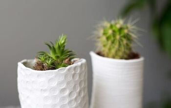 Mini Vases for Succulents