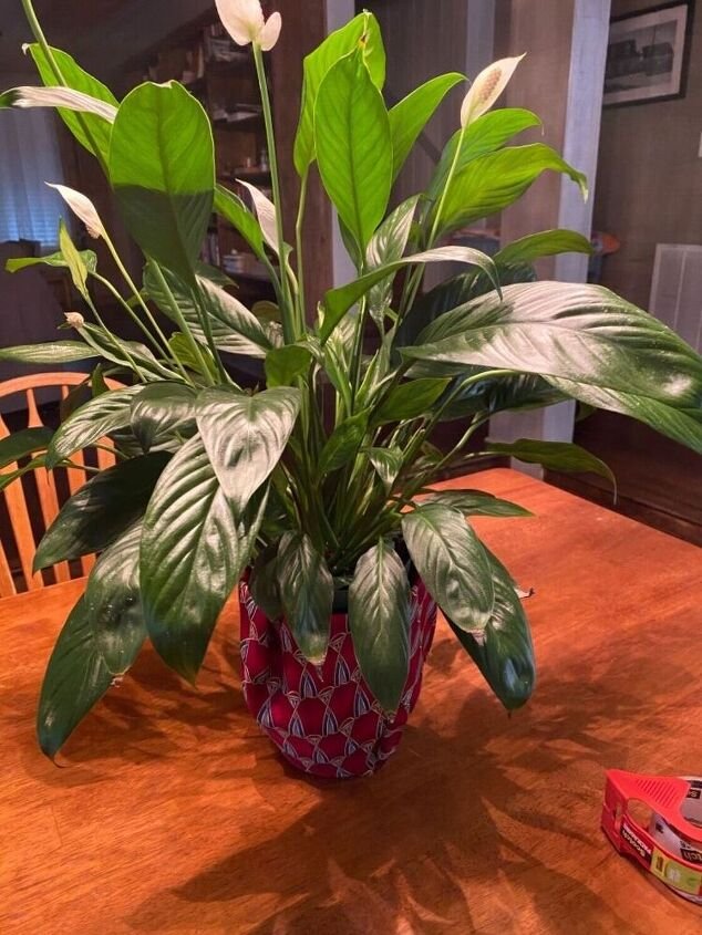 quick way to dress up a plant