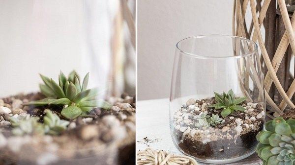 diy mini terrarium for succulents yourself