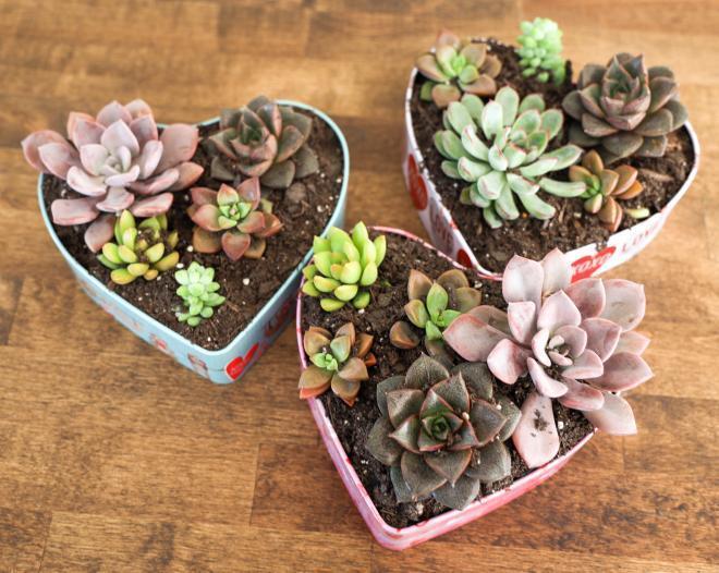 easy diy heart succulent planter stacie s spaces