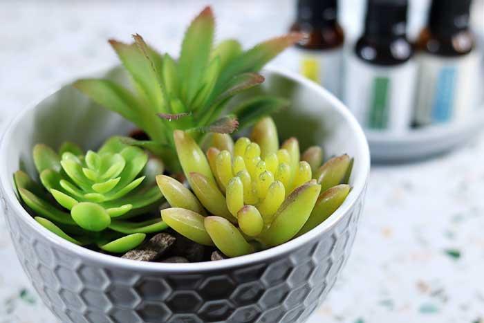 succulent diy essential oil diffuser