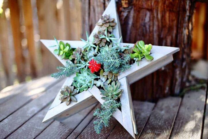 vertical star planter for succulents