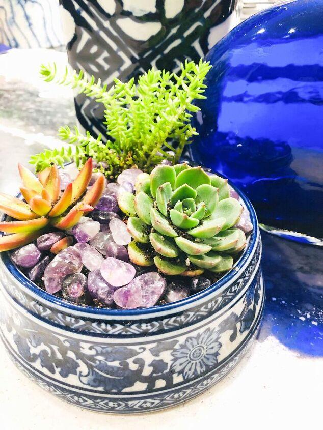 diy dog bowl succulent garden
