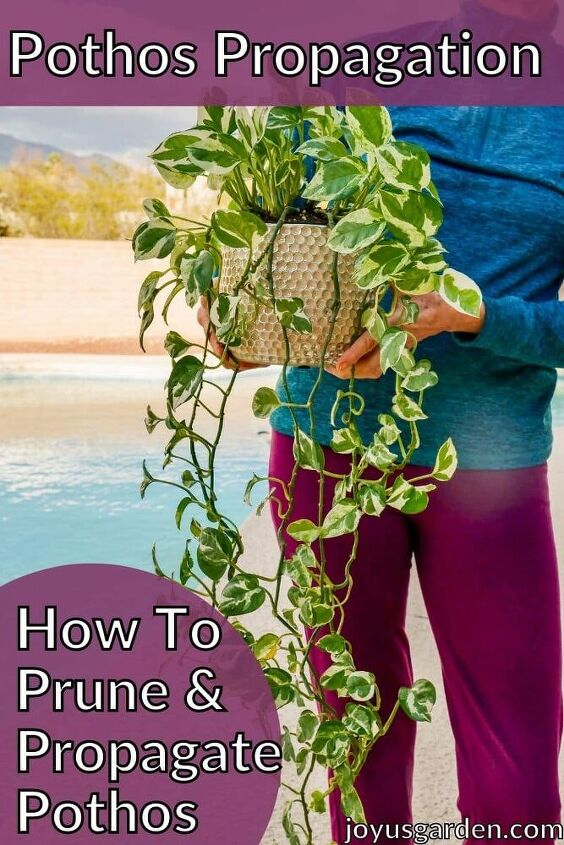pothos propagation how to prune propagate pothos
