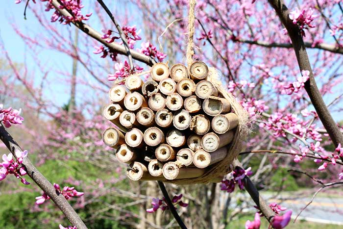 how to make a bee house for mason bees