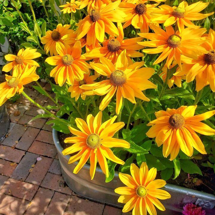 planning your cut flower garden