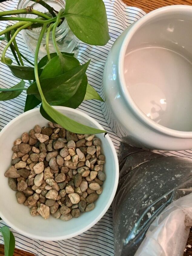 how to propagate and plant a new pothos plant