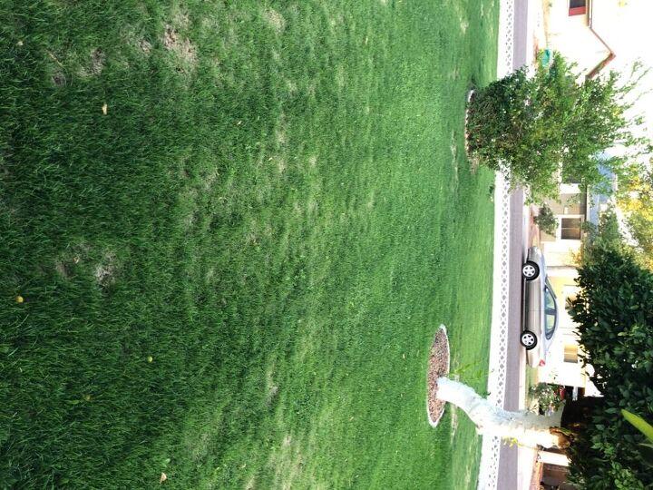 q why isn t my winter grass dead yet in phoenix
