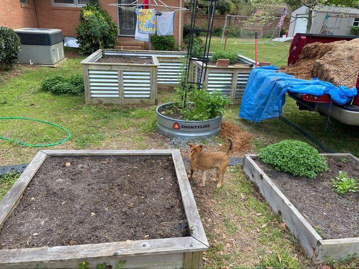 spring garden makeover, My main garden in early March