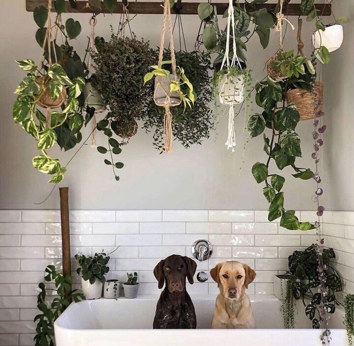 hanging plant ladder
