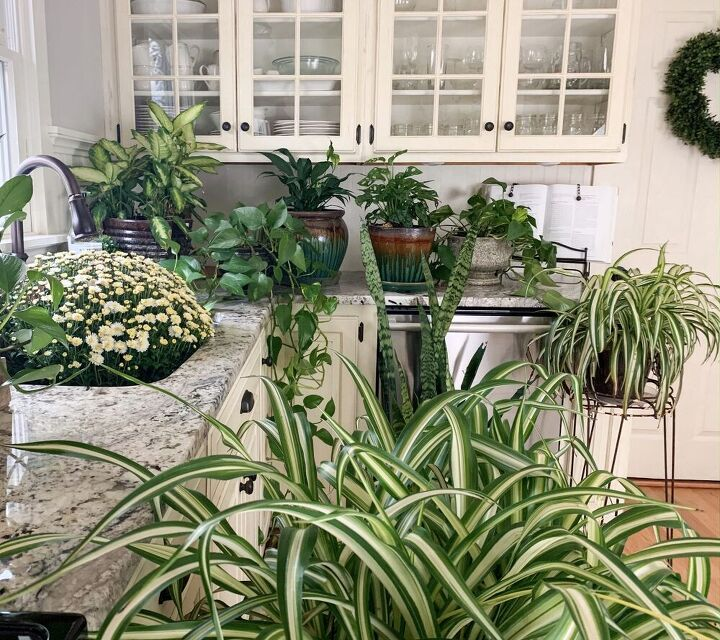 how to propagate pothos in water