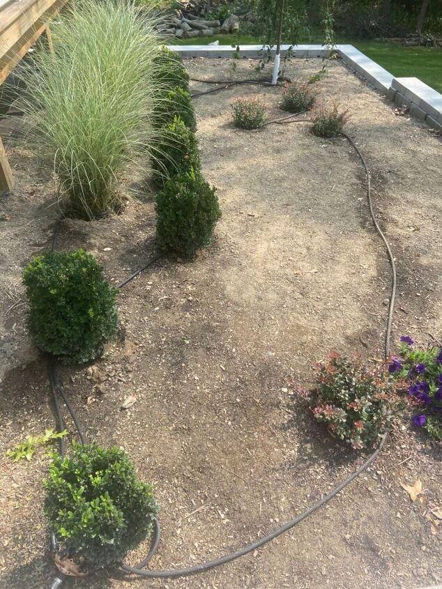 landscaping irrigation the cheap way