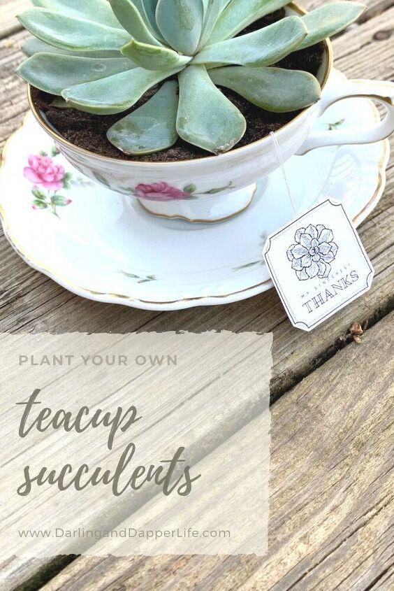 teacup succulents and other unique succulent planters