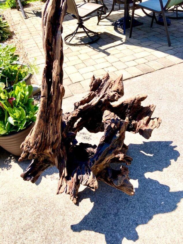 q free driftwood find