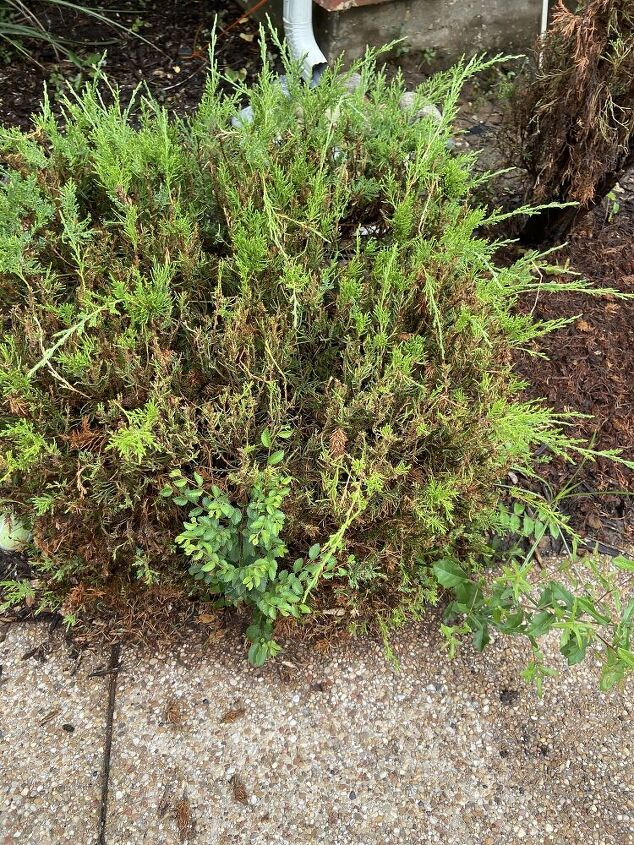 q how to take care of this tree bush