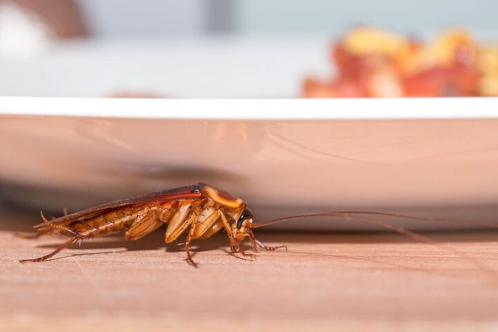 how to get rid of roaches, how to get rid of roaches