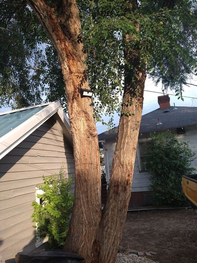 q hhow do i get rid of weed trees