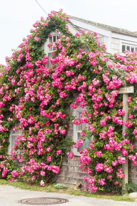 how to create a rose trellis, I found this on the internet with no idea where the original image came from otherwise I would definitely give them credit for this lovely photo
