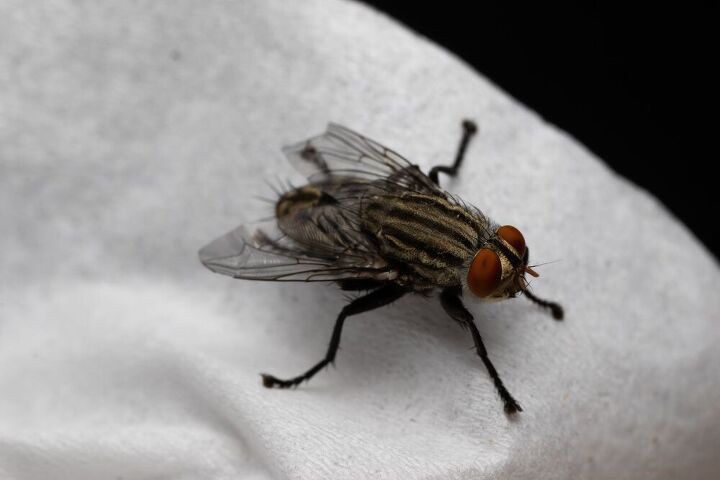 how to get rid of house flies, how to get rid of house flies