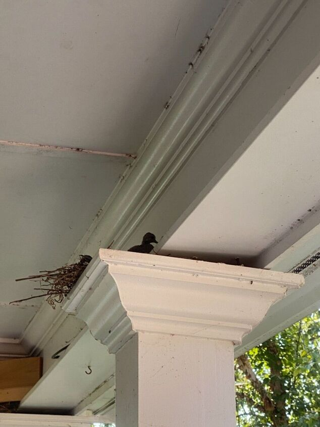how to keep birds from building nests on your porch