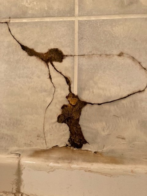 q what is this fungus growing in my shower