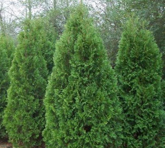q who to get for shrub tree removal and replanting
