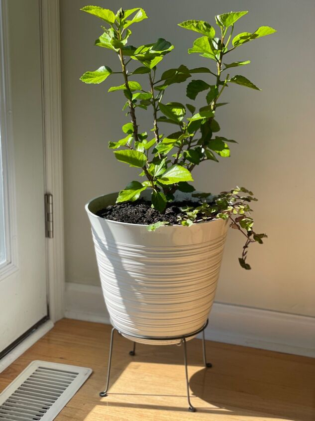 bringing in outdoor plants plant stand hack jersey girl knows bes