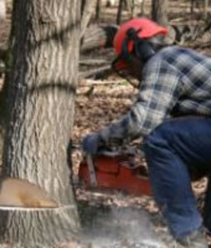 Cutting down a tree. Safety information.