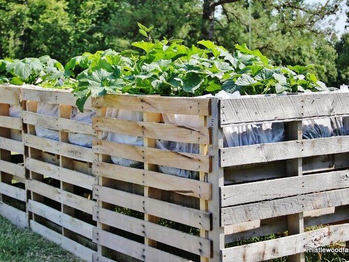 a pallet garden have you ever built one, gardening, pallet, Pallet garden