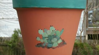 q what kind of paint can i use to apply to terra cotta flower pots i want to paint and, flowers, gardening, painting, Cactus on terra cotta This pic was taken before the sealer was put on Sealer realy makes the color of the terra cotta pop