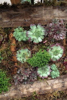got junk, gardening, repurposing upcycling, succulents, Living pallet wall art