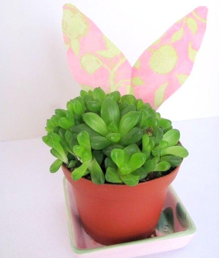 succulent plants and butterflies, flowers, gardening, succulents