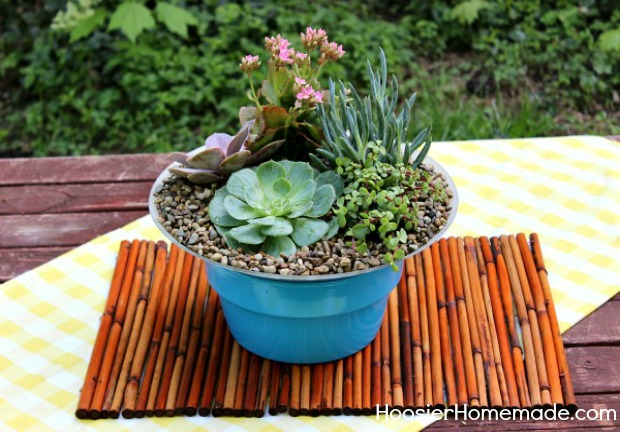 how to build and plant a succulent garden, diy, flowers, gardening, how to, succulents, Since there were some questions about Indoor Succulent Gardens I thought I would add a photo of the one we created for indoors They do great indoors
