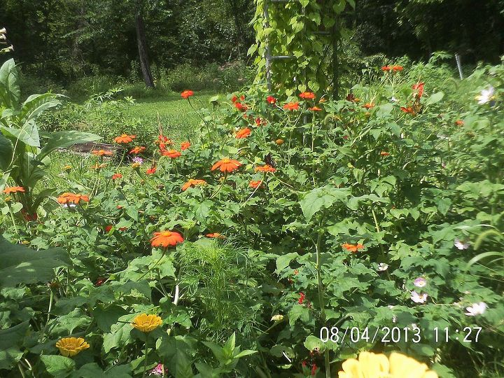 Mexican Sunflowers and Zinnia