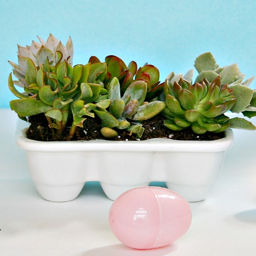 This easter hostess gift keeps on giving hometalk this easter hostess gift keeps on giving gardening succulents nothing says easter or negle Images