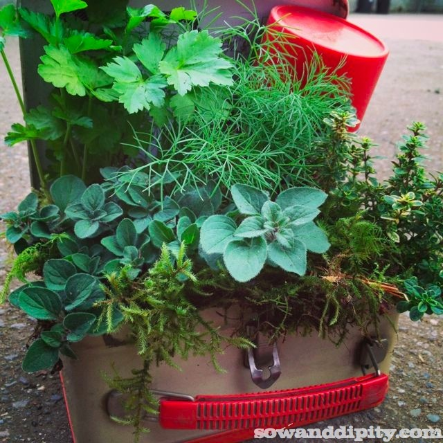 garden junk man style, container gardening, gardening, repurposing upcycling, succulents, Herb Planter in a vintage lunch box