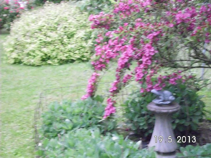some of my flowers, flowers, gardening