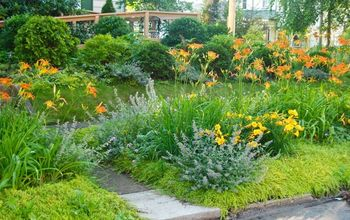front curb planting aka the front woodland, curb appeal, gardening, Our daylilies are all in bloom this week in our curb strip planting