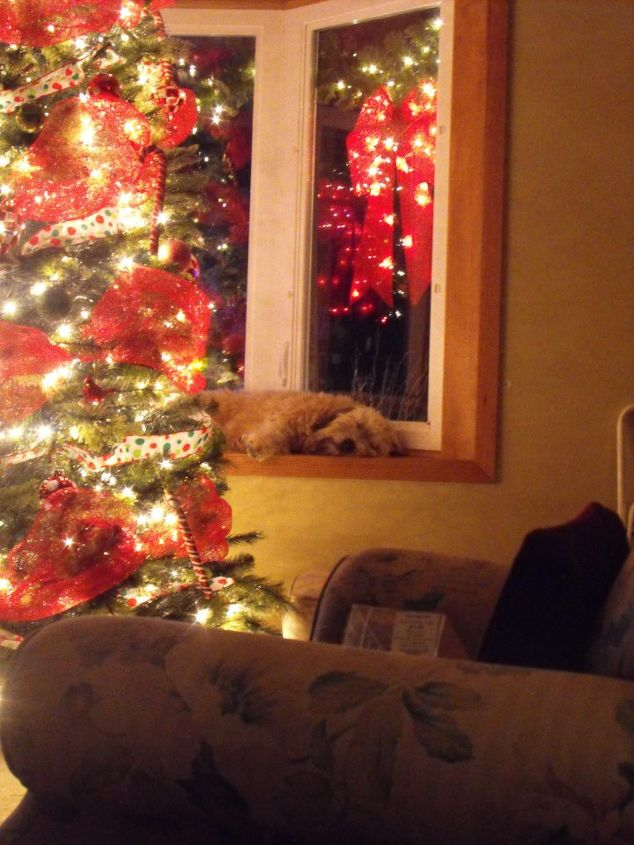 My dog-having a peaceful sleep with the lights. Carried the red and white theme inside.