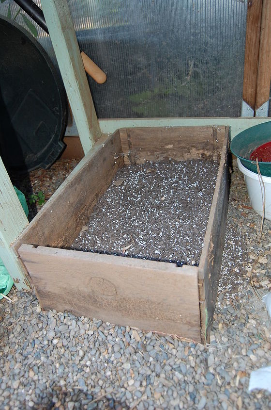 how to root roses lilacs and other semi hardwood cuttings, gardening, A very loose mix for the soil and a box with no or well draining bottom
